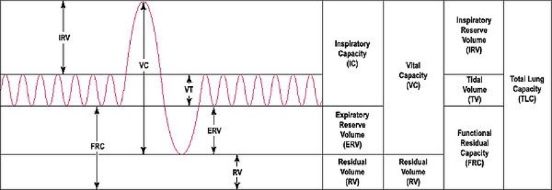 lung volumes and capacities image